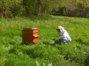 apiculteur@400x300